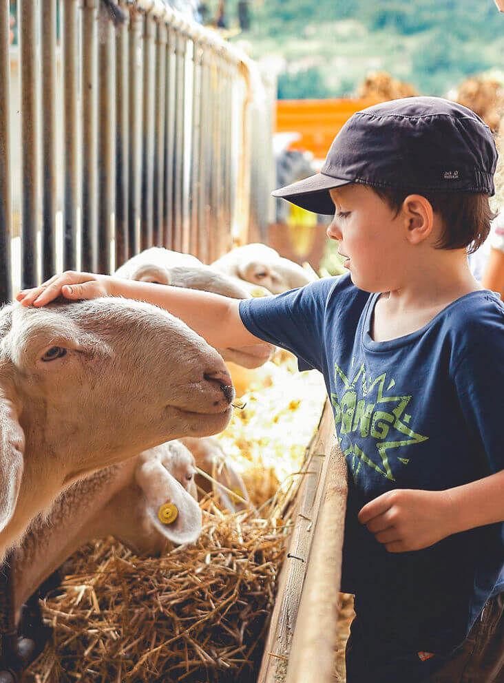 Ein kleiner Junge mit Basecap streichelt ein Schaf auf einem Bauernhof.